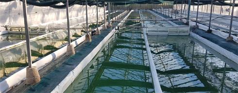 Une ferme de spiruline en Provence